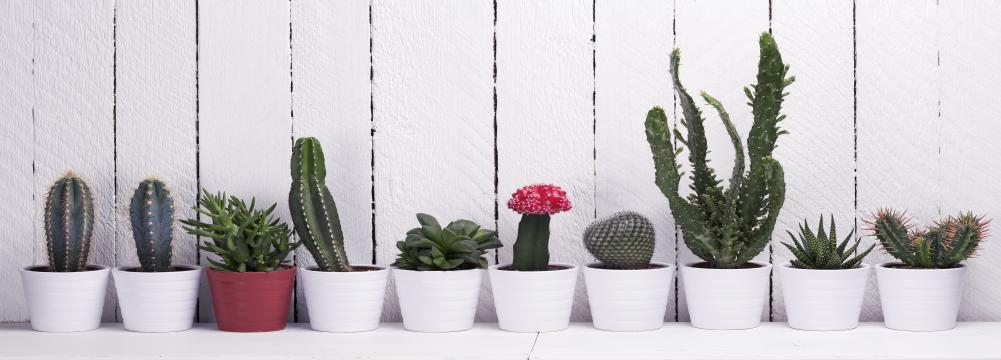 d co cactus cr dence mati re toutes les cr dences mati re pour votre cuisine sur cr dence d co. Black Bedroom Furniture Sets. Home Design Ideas